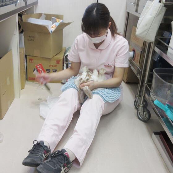 入院動物の治療風景