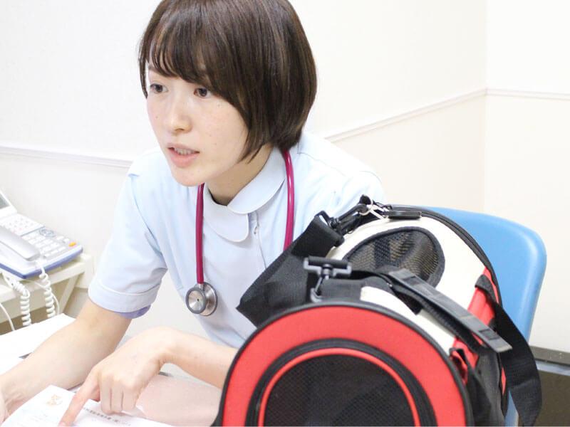 ネコちゃんの取り組みと一般診療