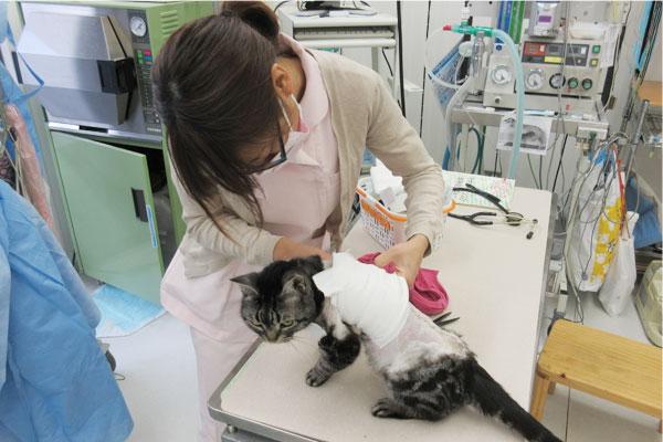 動物看護助手